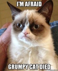 i'm afraid grumpy cat died