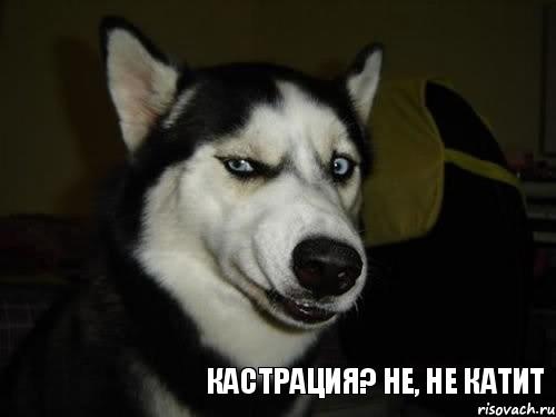 Не не катит комикс собака подозревака