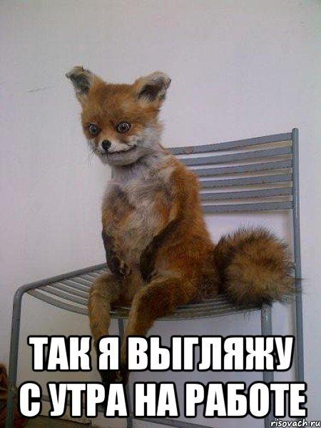 так я выгляжу с утра на работе, Мем Упоротая лиса - Рисовач .Ру