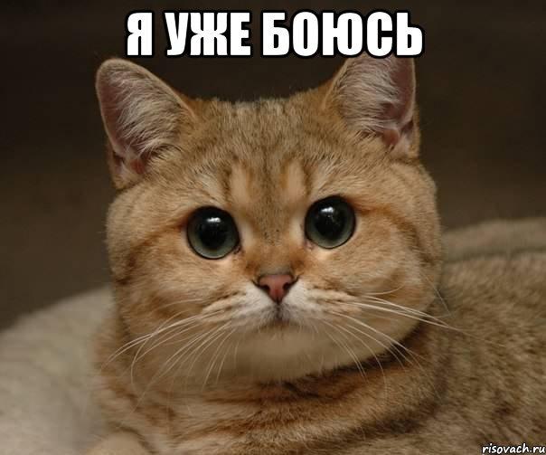 kot_5341579_orig_.jpeg