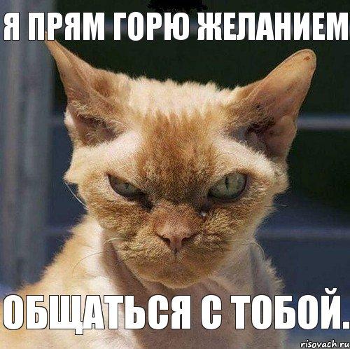 не горю: