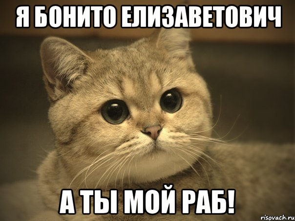 ты котик мой котик: