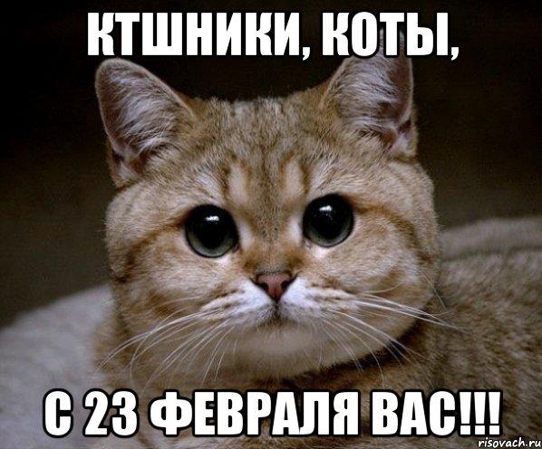 Картинки на 23 февраля с котом
