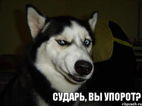 http://risovach.ru/upload/2013/02/mem/sobaka-podozrevaka_11251027_orig_.jpg