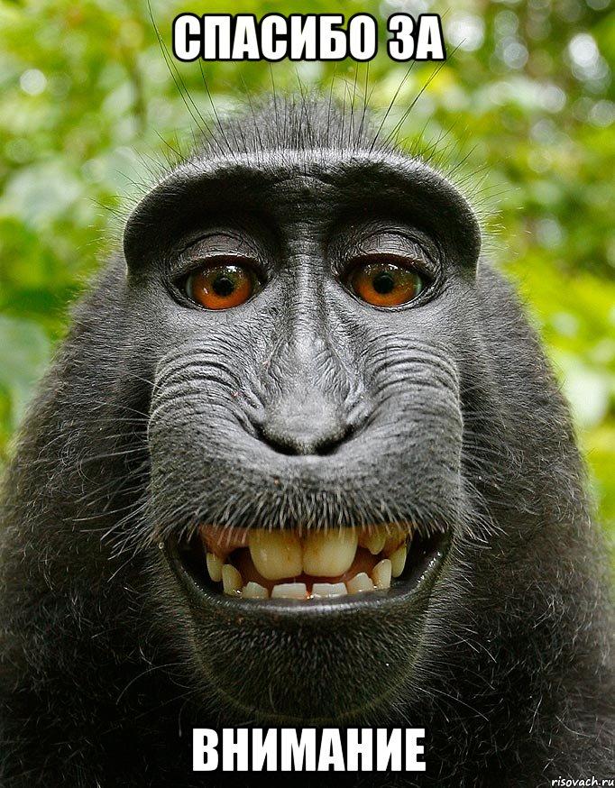 За внимание мем довольная обезьяна