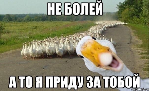 http://risovach.ru/upload/2013/03/mem/gusi_13274188_orig_.jpg