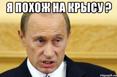 Не загоняйте крысу в угол или почему Путин сейчас наиболее опасен