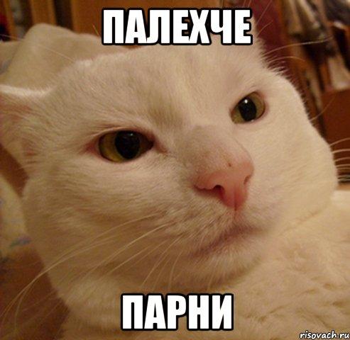 derzkij-kote_17770701_orig_.jpg