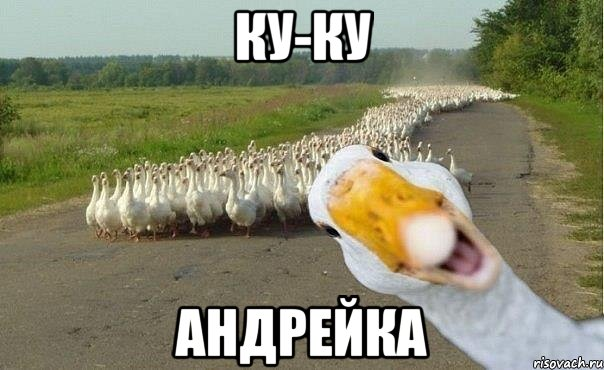 http://risovach.ru/upload/2013/04/mem/gusi_15433267_orig_.jpg