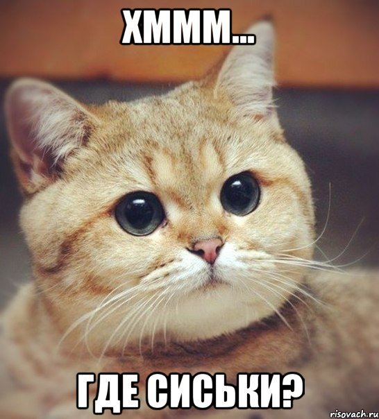 Фота где сиськи 9 фотография