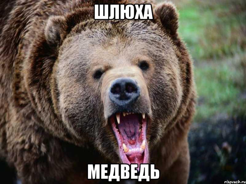 Шлюха медведь мем медведь