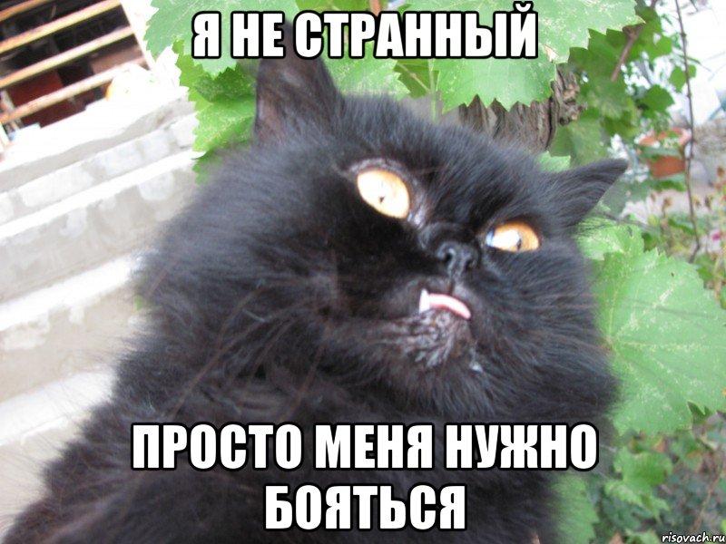Не трогай кота получишь пизды