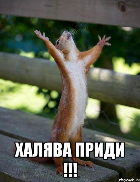 belka_19734941_orig_.jpg