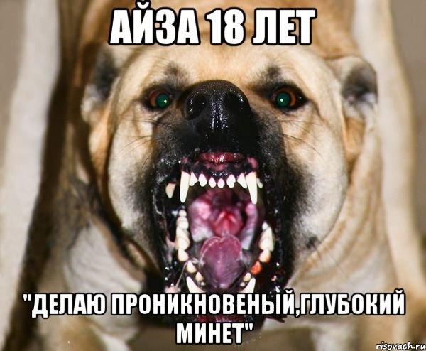 Фото мінет собаці