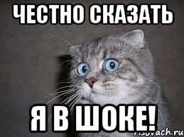 chestno-skazat-ya-tozhe_21926988_orig_.j