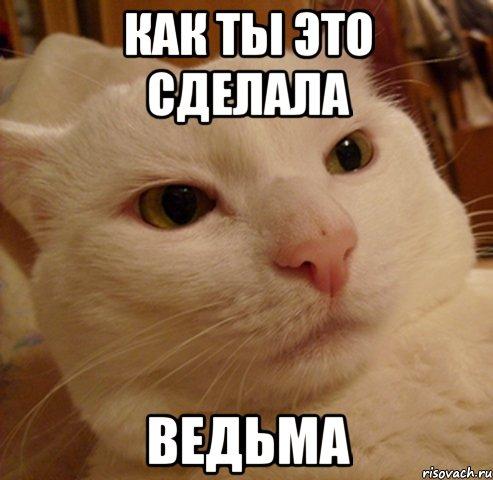 http://risovach.ru/upload/2013/06/mem/derzkij-kote_21291847_orig_.jpg