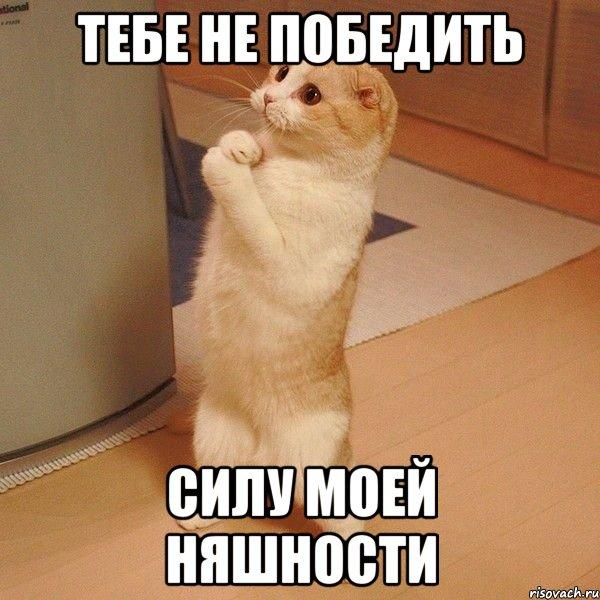 тебе не победить силу моей няшности, Мем котэ молится - Рисовач .Ру