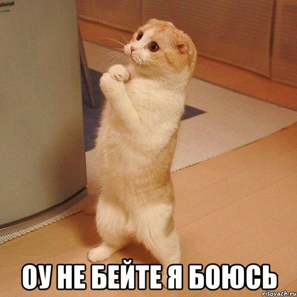 оу не бейте я боюсь, Мем котэ молится - Рисовач .Ру