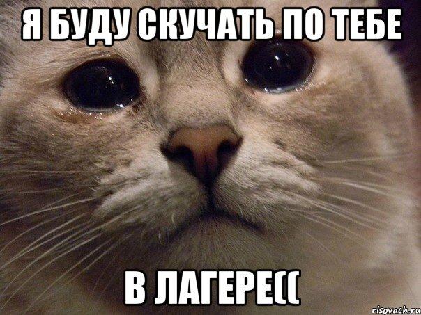 я буду скучать по тебе в лагере((, Мем В мире грустит один котик ...