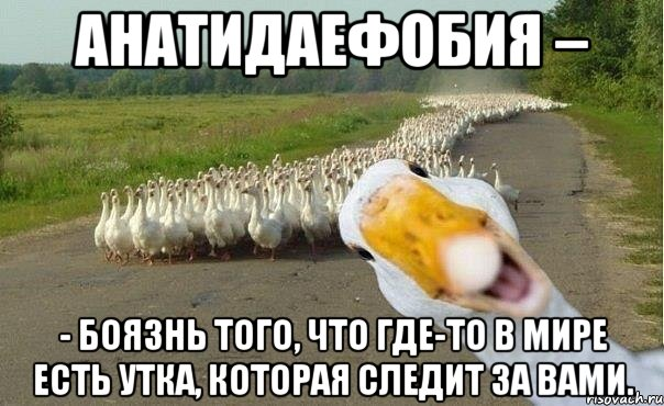 http://risovach.ru/upload/2013/07/mem/gusi_23274835_orig_.jpg