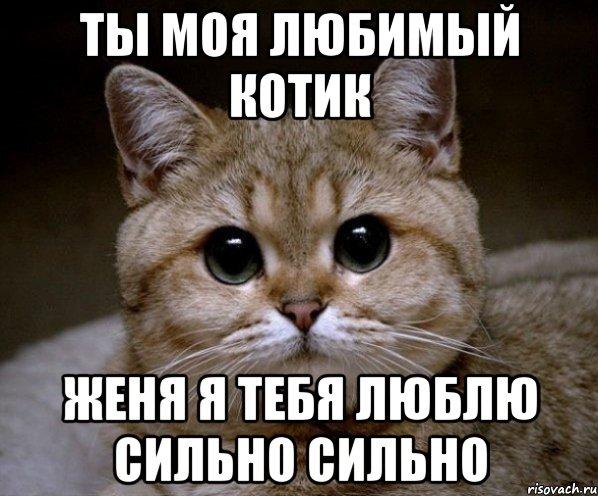 я люблю тебя мой котик картинки