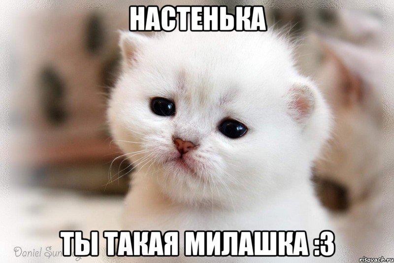 котейка фото мем