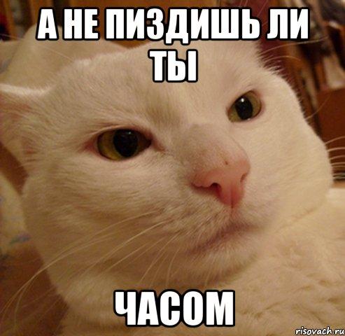 а не пиздишь ли ты часом, Мем Дерзкий котэ - Рисовач .Ру