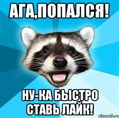 enot-kalamburist_26377608_orig_.jpg