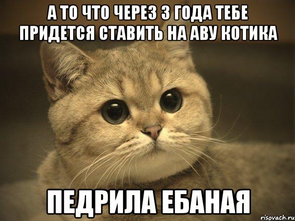 котики на аву фото
