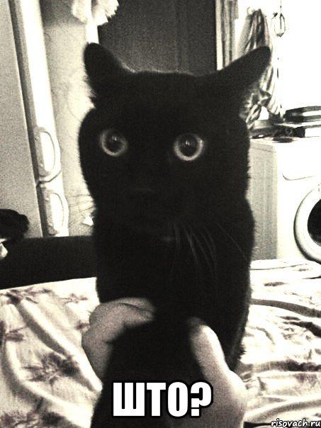 Што мем упоротый кот