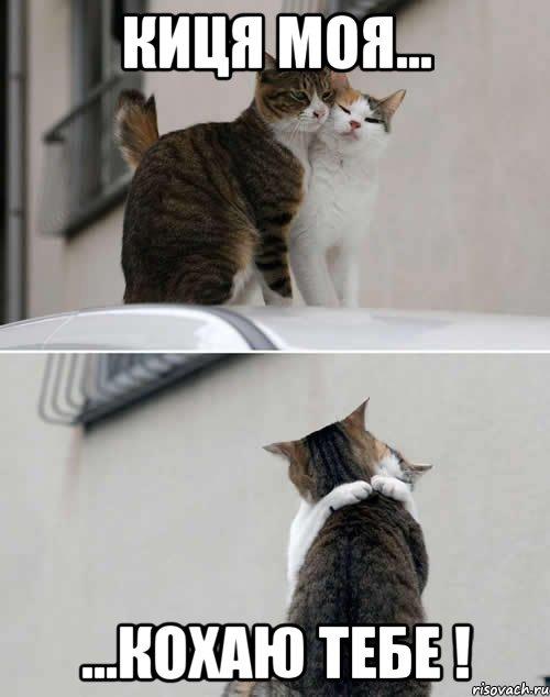Киця моя кохаю тебе мем кот
