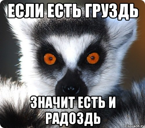 http://risovach.ru/upload/2013/09/mem/lemur_29326009_orig_.jpeg