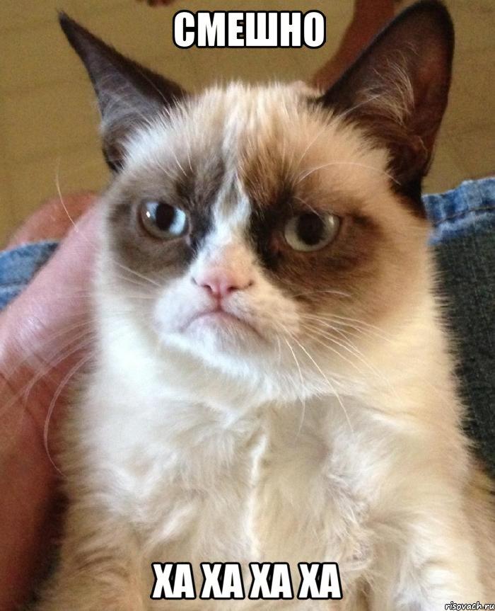 смешно ха ха ха ха, Мем Угрюмый кот - Рисовач .Ру