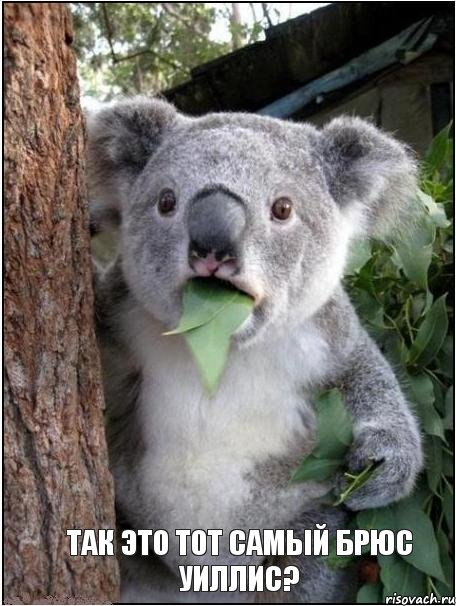 koala_32885788_orig_.jpg