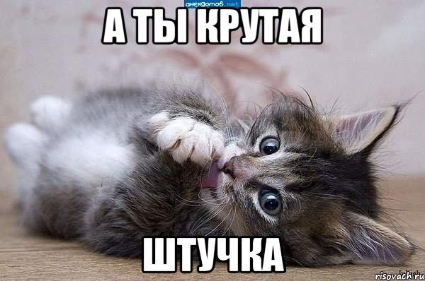 А ты крутая штучка мем котэ