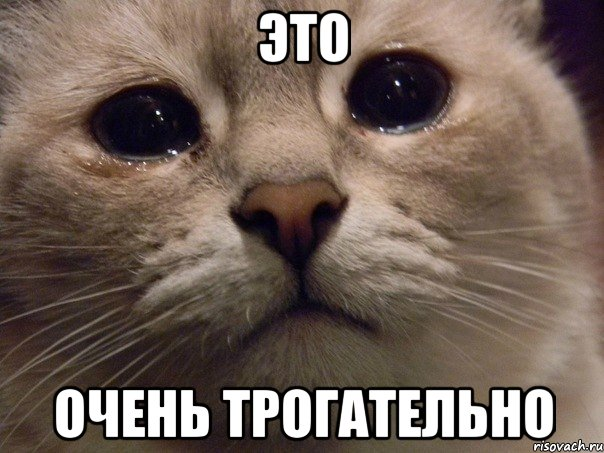 http://risovach.ru/upload/2013/10/mem/plachucshiy-kotik_33404552_orig_.jpeg