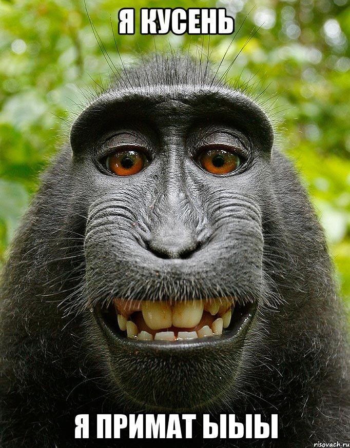 я кусень я примат ыыы, Мем Довольная обезьяна - Рисовач .Ру