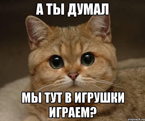 kot_36060490_orig_.jpeg