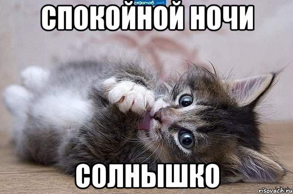 котенок картинка спокойной ночи