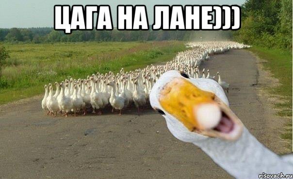 Цага на лане))) , Мем гуси - Рисовач .Ру