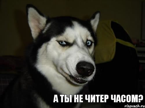 sobaka-podozrevaka_36268934_orig_.jpg