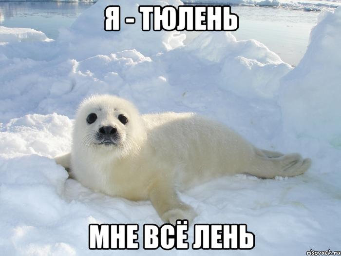 я тюлень мне все лень фото