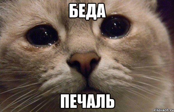 grustnyy-kot_41334418_orig_.jpeg
