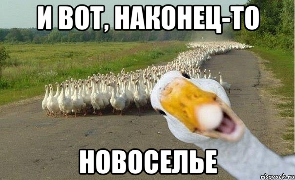 http://risovach.ru/upload/2014/01/mem/gusi_40112267_orig_.jpg