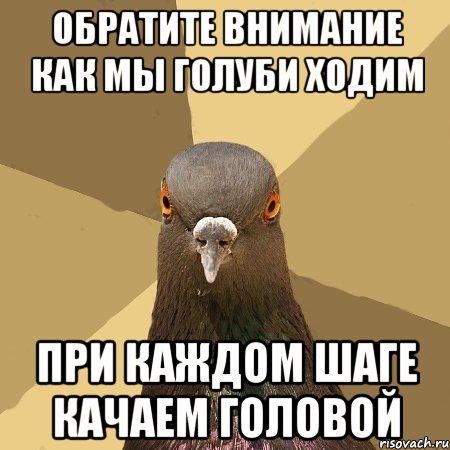К чему голубь ходит по ногам