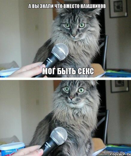 Коты секс картинки