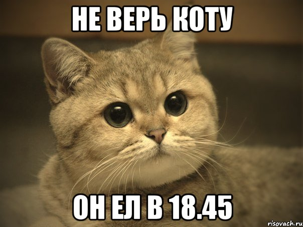 Картинки не верь коту он ел