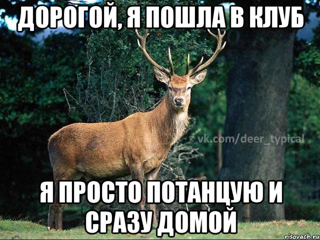 shablon-dlya-pablika-tipichnyy-olen_4177