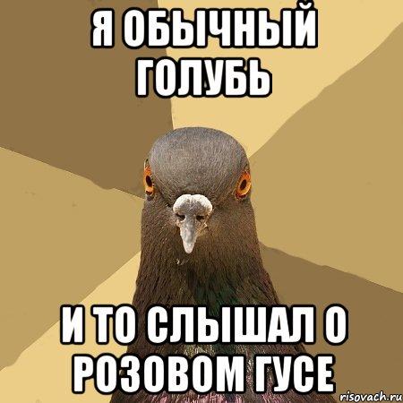 golub_45329841_orig_.jpg