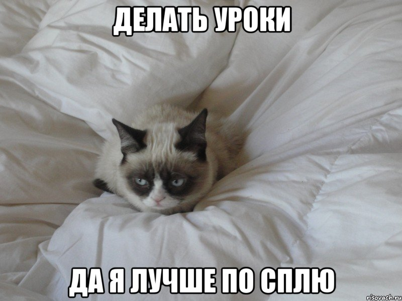 по сплю: